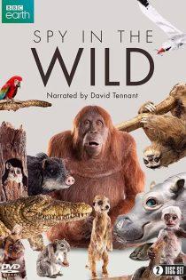 مستند جاسوسی در حیات وحش Spy in the Wild 2017