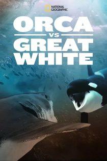 دانلود مستند اورکا در مقابل سفید عظیم Orca vs. Great White 2021
