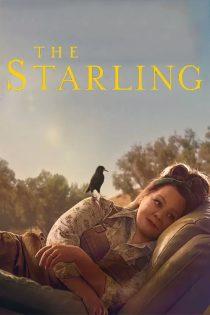 دانلود فیلم سار The Starling 2021