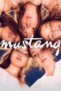 دانلود فیلم اسب وحشی Mustang 2015